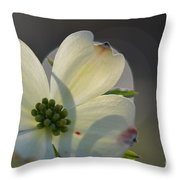 White Dogwood Blooms Series Photo K Throw Pillow