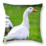 White Duck  Throw Pillow