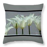White Early Dawn Tulips Black Border Throw Pillow