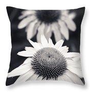 White Echinacea Flower Or Coneflower Throw Pillow by Adam Romanowicz