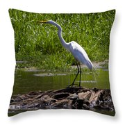 White Egret And Snapping Turtles Throw Pillow