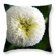 White English Daisy Throw Pillow