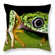 White-eyed Leaf Frog Throw Pillow