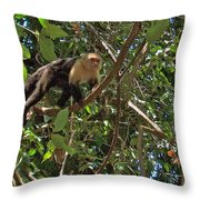 White-faced Capuchin Monkey In Manuel Antonio National Preserve-costa Rica Throw Pillow