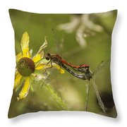 White-faced Meadowhawks Mating Throw Pillow