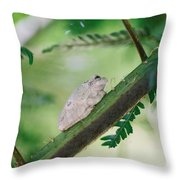 White Frog Throw Pillow