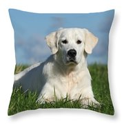 White Golden Retriever Dog Lying In Grass Throw Pillow by Dog Photos
