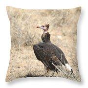 White-headed Vulture  Trigonoceps Occipitalis Throw Pillow
