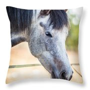 White Horse Head Throw Pillow