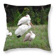 White Ibis Bliss Throw Pillow