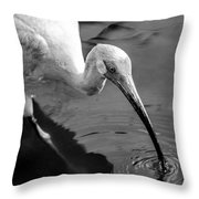 White Ibis - Bw Throw Pillow