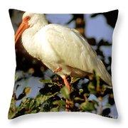 White Ibis Eudocimus Albus Throw Pillow