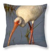 White Ibis In Grass Throw Pillow