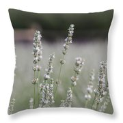 White Lavender Throw Pillow