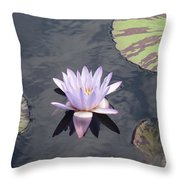 White Light Blue Tiped Waterlily Throw Pillow