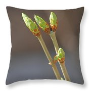 White Lilac Buds Throw Pillow