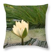 White Lily Near Pond Grass Throw Pillow