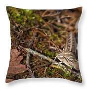 White-lined Sphinx Moth Throw Pillow