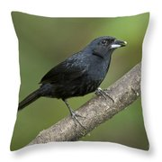 White-lined Tanager Throw Pillow