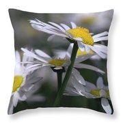 White Marguerite Throw Pillow