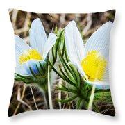 White Pasque Flower Throw Pillow