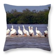 White Pelicans And Little Friends Throw Pillow