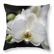 White Phalaenopsis With Water Drops 5797 Throw Pillow
