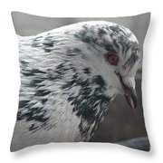 White Pigeon Throw Pillow