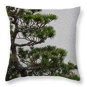 White Pine Bonsai Throw Pillow