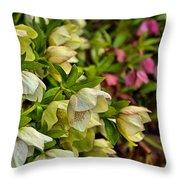 White/pink Lenten Roses Throw Pillow