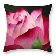 White Red Rose 01 Throw Pillow