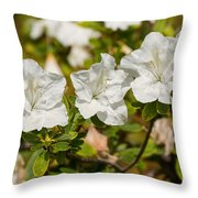 White Rhododendron Flowers In Bloom. Throw Pillow