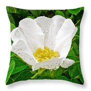 White Rose At Norris Point In Gros Morne National Park-newfoundland  Throw Pillow