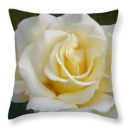 White Rose Named Ray Of Sun Throw Pillow