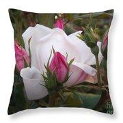 White Rose Pink Buds Throw Pillow