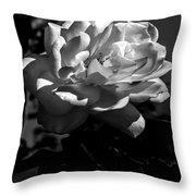 White Rose Throw Pillow by Robert Bales