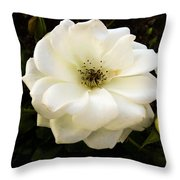 White Rose With Buds Throw Pillow
