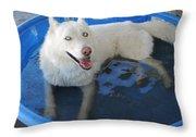 White Siberian Husky In Pool Throw Pillow
