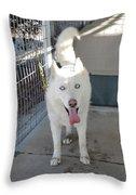 White Siberian Husky Standing Throw Pillow