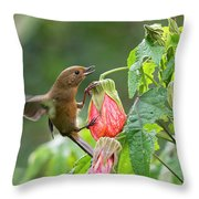 White-sided Flowerpiercer Throw Pillow