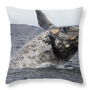 White Southern Right Whale Breaching Throw Pillow