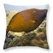 White Spotted Filefish Throw Pillow