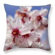 White Spring Almond Flowers Throw Pillow
