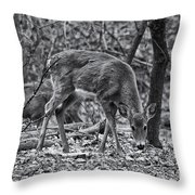 White-tail Deer Throw Pillow