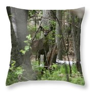 White Tailed Deer Encounter  Throw Pillow
