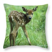 White-tailed Deer Fawn Meadow Throw Pillow