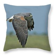 White-tailed Hawk Throw Pillow