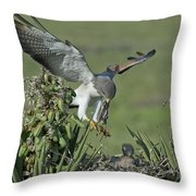 White-tailed Hawk At Nest Throw Pillow