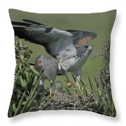 White-tailed Hawks At Nest Throw Pillow