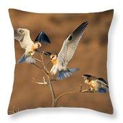 White-tailed Kite Trio Throw Pillow
